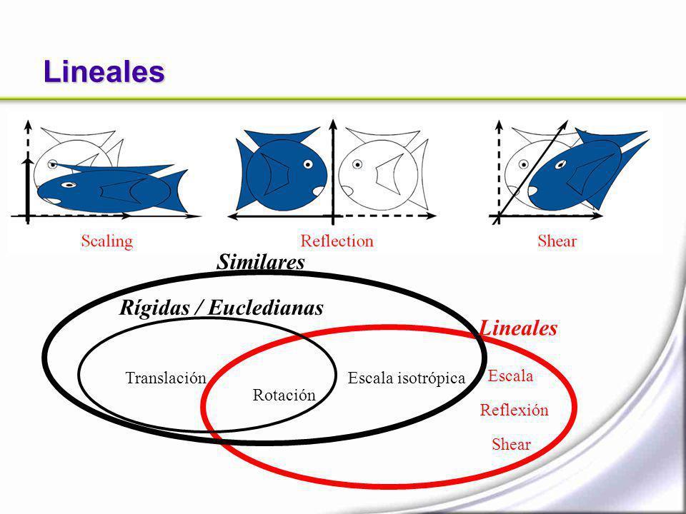 Lineales Escala Shear Reflexión Translación Rotación Rígidas / Eucledianas Similares Escala isotrópica Lineales