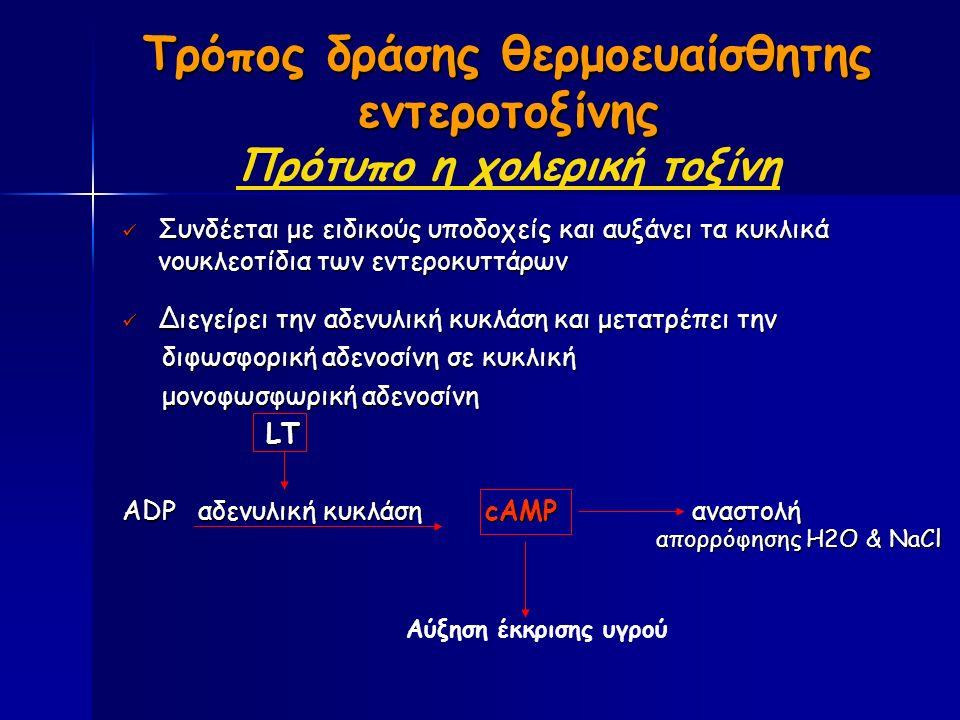 Τρόπος δράσης θερμοευαίσθητης εντεροτοξίνης Τρόπος δράσης θερμοευαίσθητης εντεροτοξίνης Πρότυπο η χολερική τοξίνη Συνδέεται με ειδικούς υποδοχείς και αυξάνει τα κυκλικά νουκλεοτίδια των εντεροκυττάρων Συνδέεται με ειδικούς υποδοχείς και αυξάνει τα κυκλικά νουκλεοτίδια των εντεροκυττάρων Διεγείρει την αδενυλική κυκλάση και μετατρέπει την Διεγείρει την αδενυλική κυκλάση και μετατρέπει την διφωσφορική αδενοσίνη σε κυκλική διφωσφορική αδενοσίνη σε κυκλική μονοφωσφωρική αδενοσίνη μονοφωσφωρική αδενοσίνη LT LT ADP αδενυλική κυκλάση cAMP αναστολή Αύξηση έκκρισης υγρού απορρόφησης H2Ο & NaCl