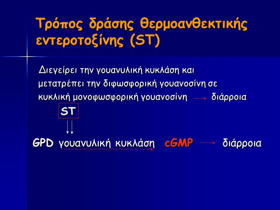 Τρόπος δράσης θερμοανθεκτικής εντεροτοξίνης (ST) Διεγείρει την γουανυλική κυκλάση και Διεγείρει την γουανυλική κυκλάση και μετατρέπει την διφωσφορική γουανοσίνη σε μετατρέπει την διφωσφορική γουανοσίνη σε κυκλική μονοφωσφορική γουανοσίνη διάρροια κυκλική μονοφωσφορική γουανοσίνη διάρροια ST ST GPD γουανυλική κυκλάση cGMP διάρροια GPD γουανυλική κυκλάση cGMP διάρροια
