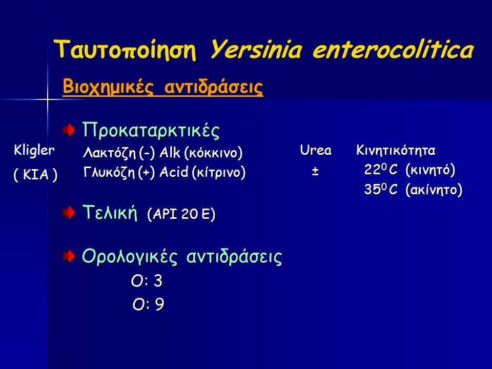 Ταυτοποίηση Yersinia enterocolitica Βιοχημικές αντιδράσεις Προκαταρκτικές Προκαταρκτικές Λακτόζη (-) Alk (κόκκινο) Λακτόζη (-) Alk (κόκκινο) Γλυκόζη (+) Acid (κίτρινο) Γλυκόζη (+) Acid (κίτρινο) Τελική (API 20 E) Τελική (API 20 E) Ορολογικές αντιδράσεις Ορολογικές αντιδράσεις Ο: 3 Ο: 3 Ο: 9 Ο: 9Urea ±Κινητικότητα 22 0 C (κινητό) 22 0 C (κινητό) 35 0 C (ακίνητο) 35 0 C (ακίνητο) Kligler ( ΚΙΑ )