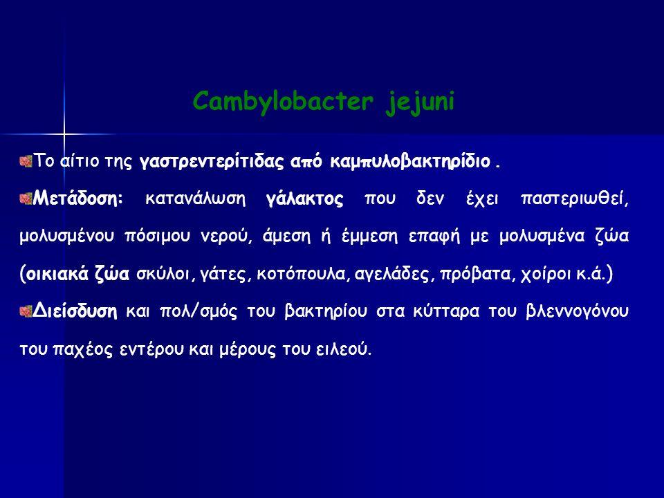 Cambylobacter jejuni Το αίτιο της γαστρεντερίτιδας από καμπυλοβακτηρίδιο.