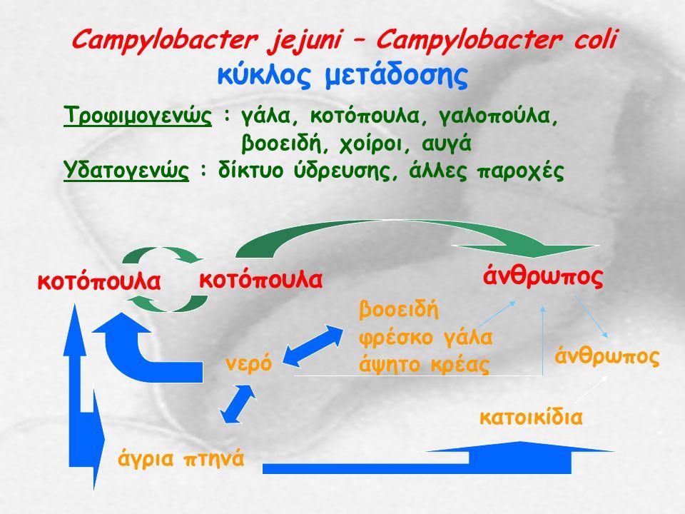 Campylobacter jejuni – Campylobacter coli κύκλος μετάδοσης Τροφιμογενώς : γάλα, κοτόπουλα, γαλοπούλα, βοοειδή, χοίροι, αυγά Υδατογενώς : δίκτυο ύδρευσης, άλλες παροχές κοτόπουλα άνθρωπος άγρια πτηνά νερό βοοειδή φρέσκο γάλα άψητο κρέας κατοικίδια άνθρωπος