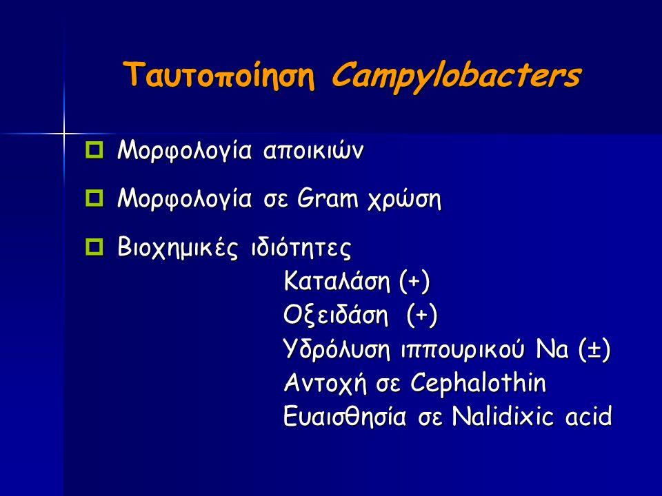 Ταυτοποίηση Campylobacters  Μορφολογία αποικιών  Μορφολογία σε Gram χρώση  Βιοχημικές ιδιότητες Καταλάση (+) Οξειδάση (+) Υδρόλυση ιππουρικού Νa (±) Αντοχή σε Cephalothin Ευαισθησία σε Nalidixic acid