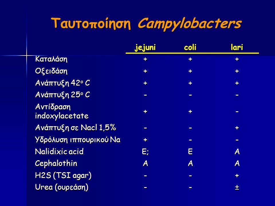 Ταυτοποίηση Campylobacters jejunicolilari Καταλάση+++ Οξειδάση+++ Ανάπτυξη 42 ο C +++ Ανάπτυξη 25 ο C --- Αντίδραση indoxylacetate ++- Ανάπτυξη σε Nacl 1,5% --+ Υδρόλυση ιππουρικού Na +-- Nalidixic acid Ε;ΕΑ CephalothinΑΑΑ H2S (TSI agar) --+ Urea (ουρεάση) --±