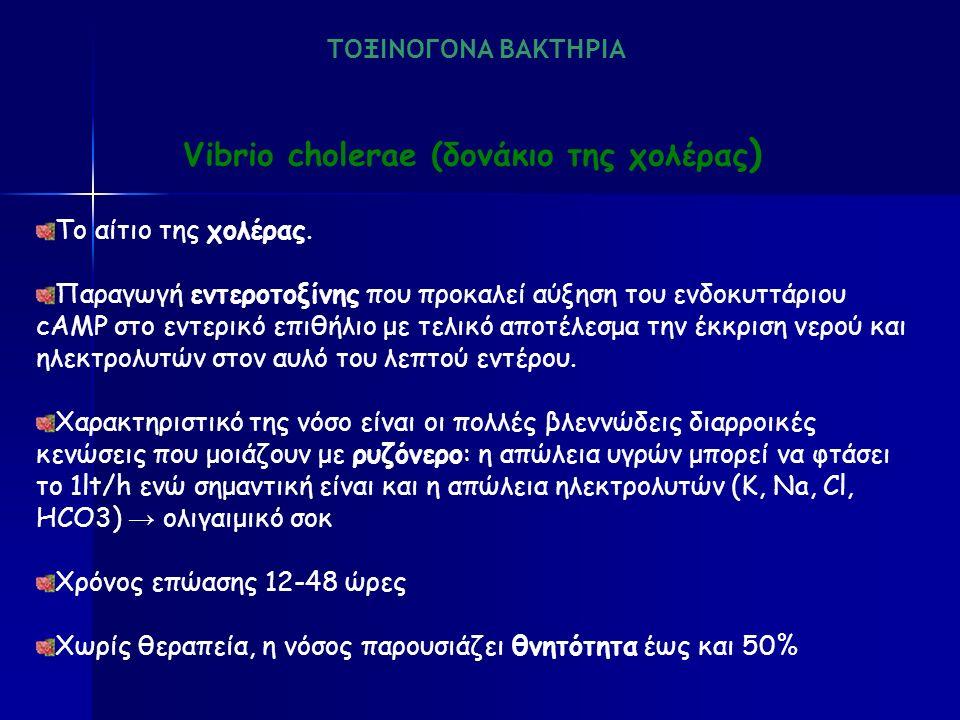Vibrio cholerae (δονάκιο της χολέρας ) Το αίτιο της χολέρας.