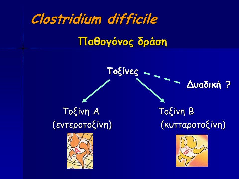 Clostridium difficile Παθογόνος δράση Τοξίνες Δυαδική .