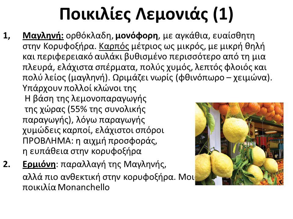 Ποικιλίες Λεμονιάς (2) 3.Καρυστινή: πλαγιόκλαδη, μονόφορη, με λιγότερα αγκάθια, επίσης ευαίσθητη στην Κορυφοξήρα.