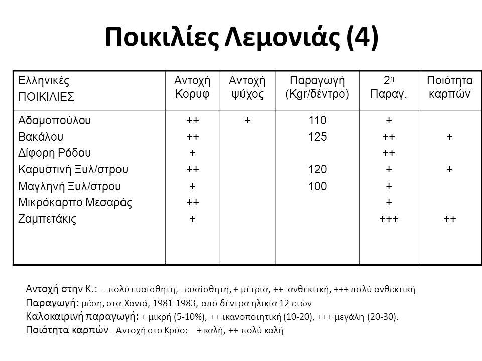 Bearss (Sicilian): Πρόσφατη επιλογή, συγκομιδή από Ιούλιο - Δεκέμβριο.