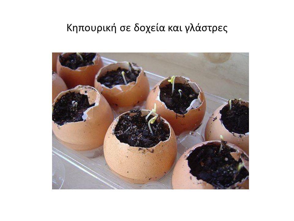 Κηπουρική σε δοχεία και γλάστρες