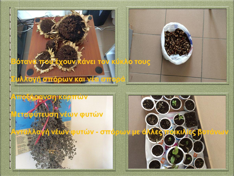 Βότανα που έχουν κάνει τον κύκλο τους Συλλογή σπόρων και νέα σπορά Αποξήρανση καρπών Μεταφύτευση νέων φυτών Ανταλλαγή νέων φυτών - σπόρων με άλλες ποικιλίες βοτάνων