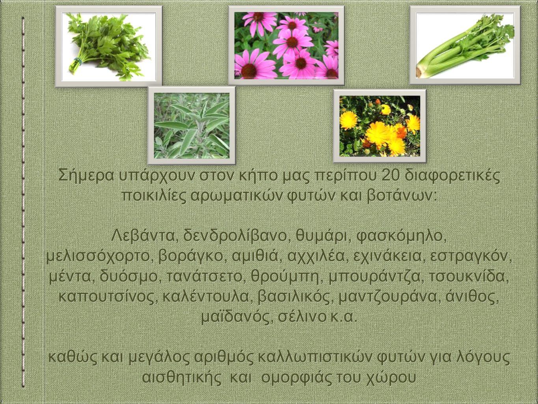 Σήμερα υπάρχουν στον κήπο μας περίπου 20 διαφορετικές ποικιλίες αρωματικών φυτών και βοτάνων: Λεβάντα, δενδρολίβανο, θυμάρι, φασκόμηλο, μελισσόχορτο, βοράγκο, αμιθιά, αχχιλέα, εχινάκεια, εστραγκόν, μέντα, δυόσμο, τανάτσετο, θρούμπη, μπουράντζα, τσουκνίδα, καπουτσίνος, καλέντουλα, βασιλικός, μαντζουράνα, άνιθος, μαϊδανός, σέλινο κ.α.