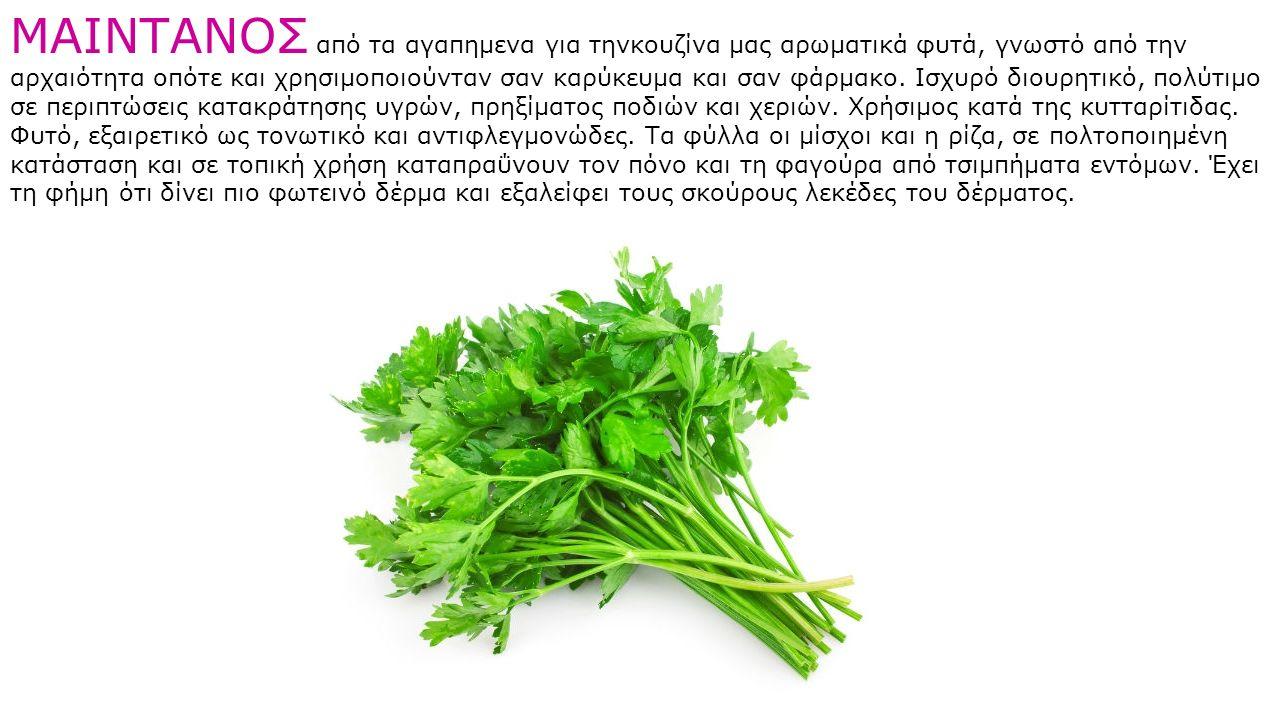 ΜΑΙΝΤΑΝΟΣ από τα αγαπημενα για τηνκουζίνα μας αρωματικά φυτά, γνωστό από την αρχαιότητα οπότε και χρησιμοποιούνταν σαν καρύκευμα και σαν φάρμακο. Ισχυ
