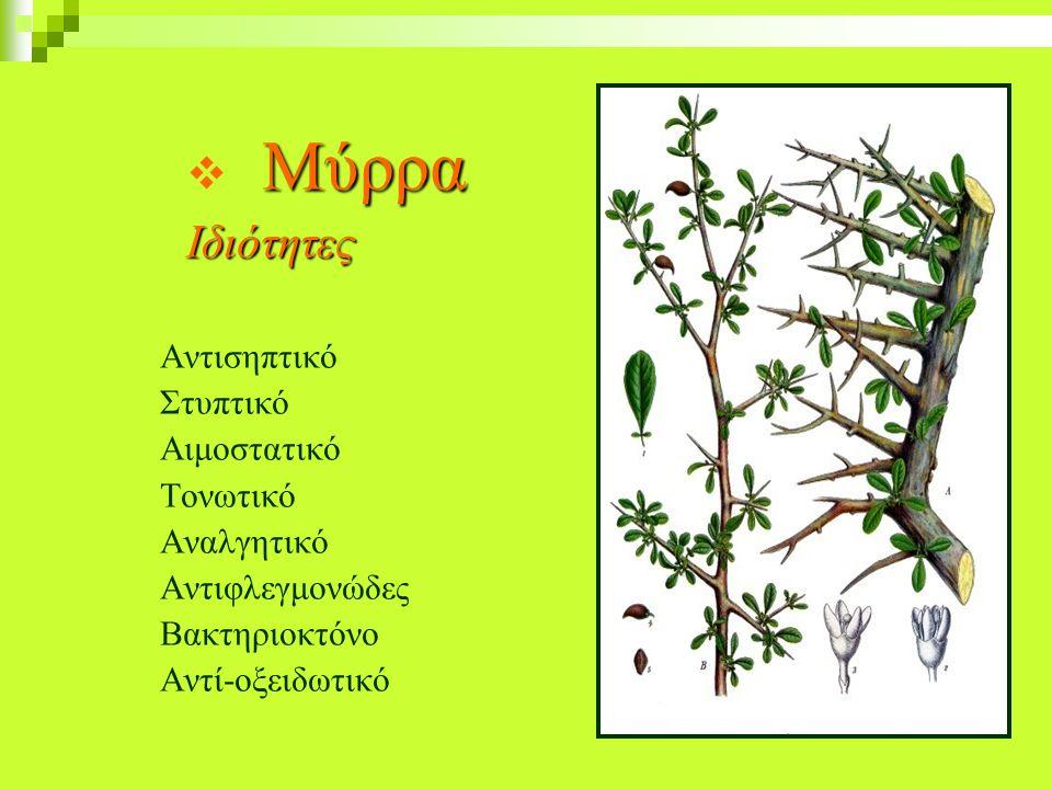 ΙΣΤΟΡΙΚΕΣ ΑΝΑΦΟΡΕΣ 1956 -1957 Levensos και K. Somova στη Ρωσία: Χρησιμοποιούν απόσταγμα Αλόης (χυμός) για τη θεραπεία της περιοδοντικής ασθένειας.150