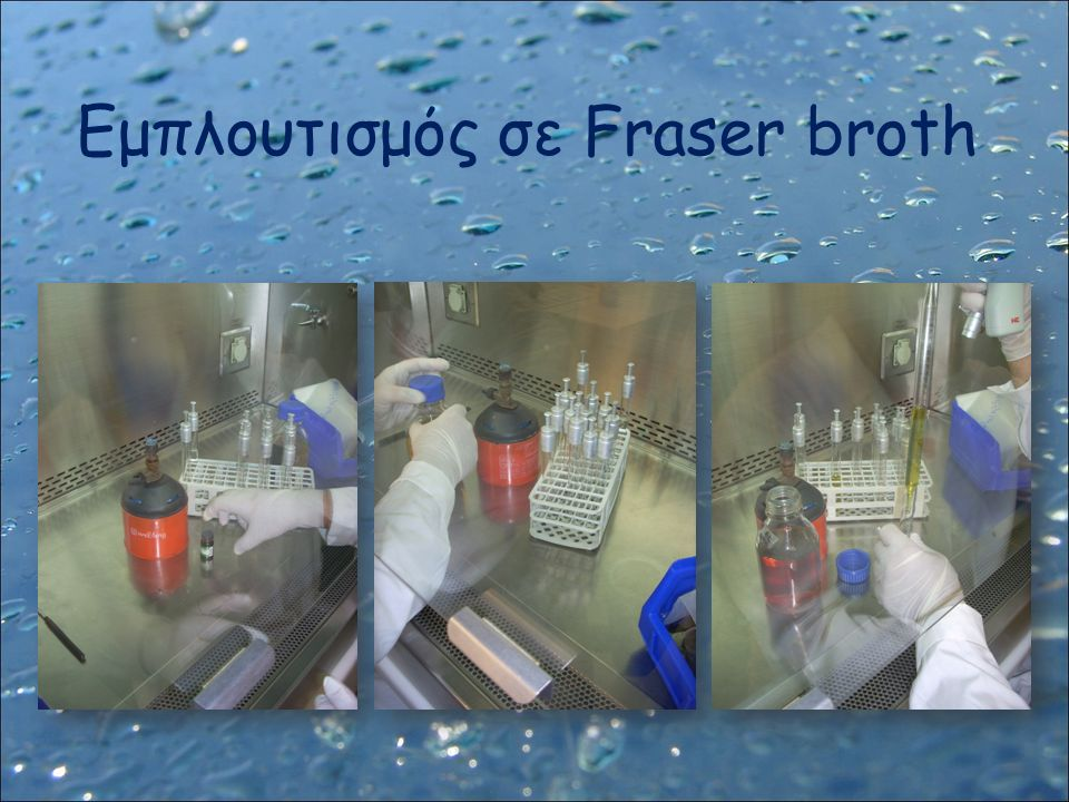 Εμπλουτισμός σε Fraser broth