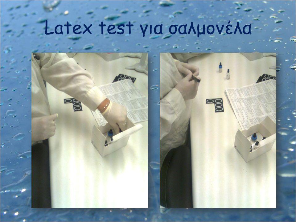 Latex test για σαλμονέλα