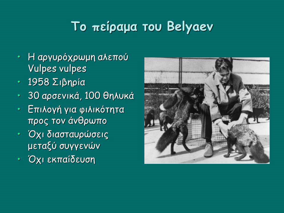Το πείραμα του Belyaev Η αργυρόχρωμη αλεπού Vulpes vulpesΗ αργυρόχρωμη αλεπού Vulpes vulpes 1958 Σιβηρία1958 Σιβηρία 30 αρσενικά, 100 θηλυκά30 αρσενικά, 100 θηλυκά Επιλογή για φιλικότητα προς τον άνθρωποΕπιλογή για φιλικότητα προς τον άνθρωπο Όχι διασταυρώσεις μεταξύ συγγενώνΌχι διασταυρώσεις μεταξύ συγγενών Όχι εκπαίδευσηΌχι εκπαίδευση