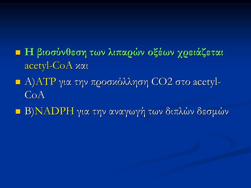 H βιοσύνθεση των λιπαρών οξέων χρειάζεται acetyl-CoA και H βιοσύνθεση των λιπαρών οξέων χρειάζεται acetyl-CoA και Α)ΑΤΡ για την προσκόλληση CO2 στο acetyl- CoA Α)ΑΤΡ για την προσκόλληση CO2 στο acetyl- CoA B)NADPH για την αναγωγή των διπλών δεσμών B)NADPH για την αναγωγή των διπλών δεσμών