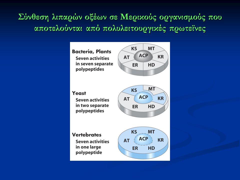 Σύνθεση λιπαρών οξέων σε Μερικούς οργανισμούς που αποτελούνται από πολυλειτουργικές πρωτεϊνες
