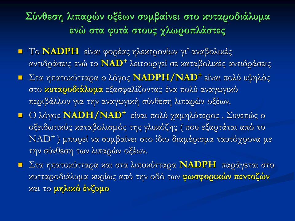 Σύνθεση λιπαρών οξέων συμβαίνει στο κυταροδιάλυμα ενώ στα φυτά στους χλωροπλάστες Το NADPH είναι φορέας ηλεκτρονίων γι' αναβολικές αντιδράσεις ενώ το NAD + λειτουργεί σε καταβολικές αντιδράσεις Το NADPH είναι φορέας ηλεκτρονίων γι' αναβολικές αντιδράσεις ενώ το NAD + λειτουργεί σε καταβολικές αντιδράσεις Στα ηπατοκύτταρα ο λόγος NADPH/NAD + είναι πολύ υψηλός στο κυταροδιάλυμα εξασφαλίζοντας ένα πολύ αναγωγικό περιβάλλον για την αναγωγική σύνθεση λιπαρών οξέων.