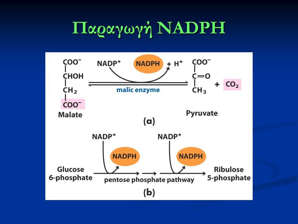 Παραγωγή NADPH