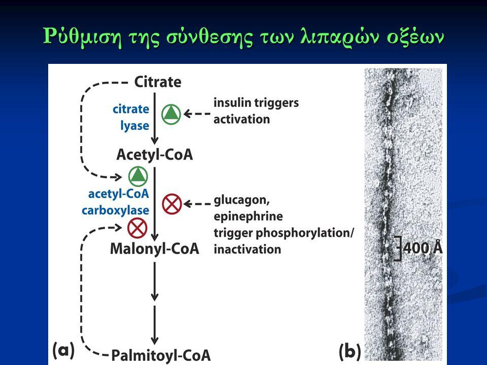 Ρύθμιση της σύνθεσης των λιπαρών οξέων
