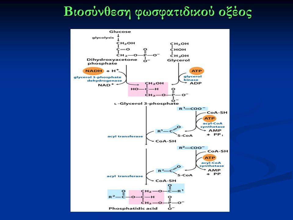 Βιοσύνθεση φωσφατιδικού οξέος