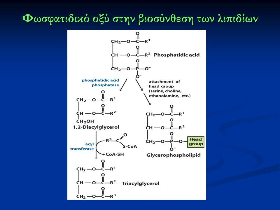Φωσφατιδικό οξύ στην βιοσύνθεση των λιπιδίων