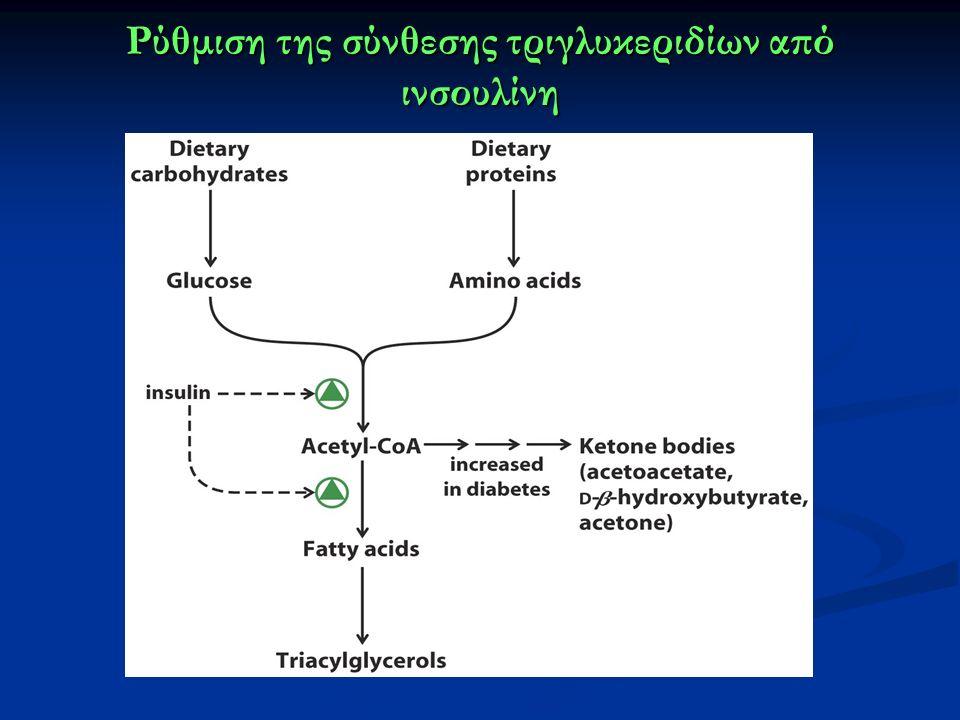 Ρύθμιση της σύνθεσης τριγλυκεριδίων από ινσουλίνη