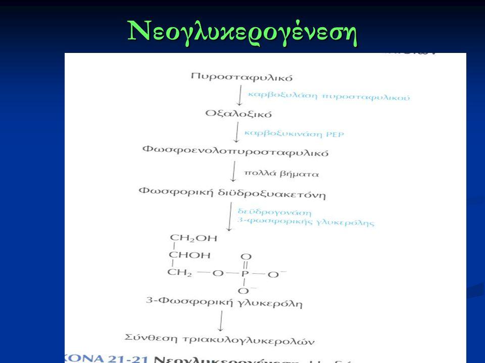 Νεογλυκερογένεση