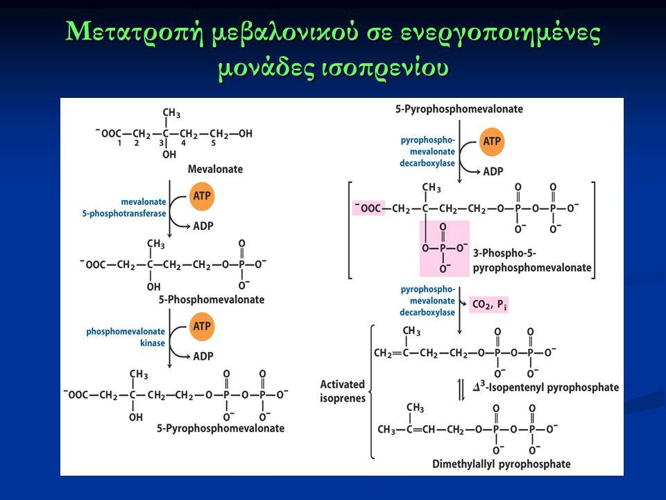 Μετατροπή μεβαλονικού σε ενεργοποιημένες μονάδες ισοπρενίου