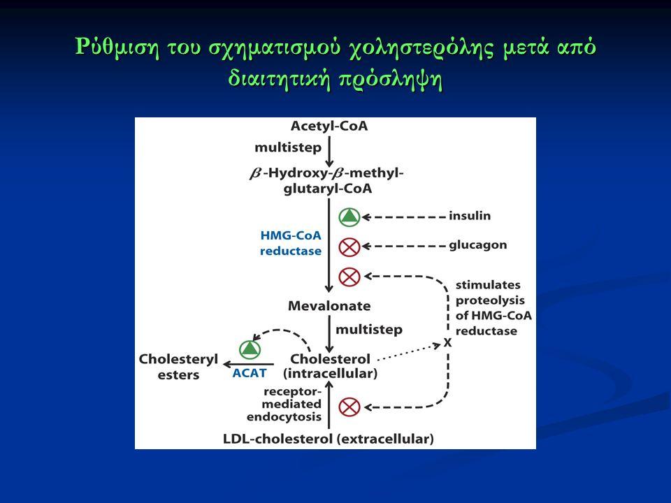 Ρύθμιση του σχηματισμού χοληστερόλης μετά από διαιτητική πρόσληψη