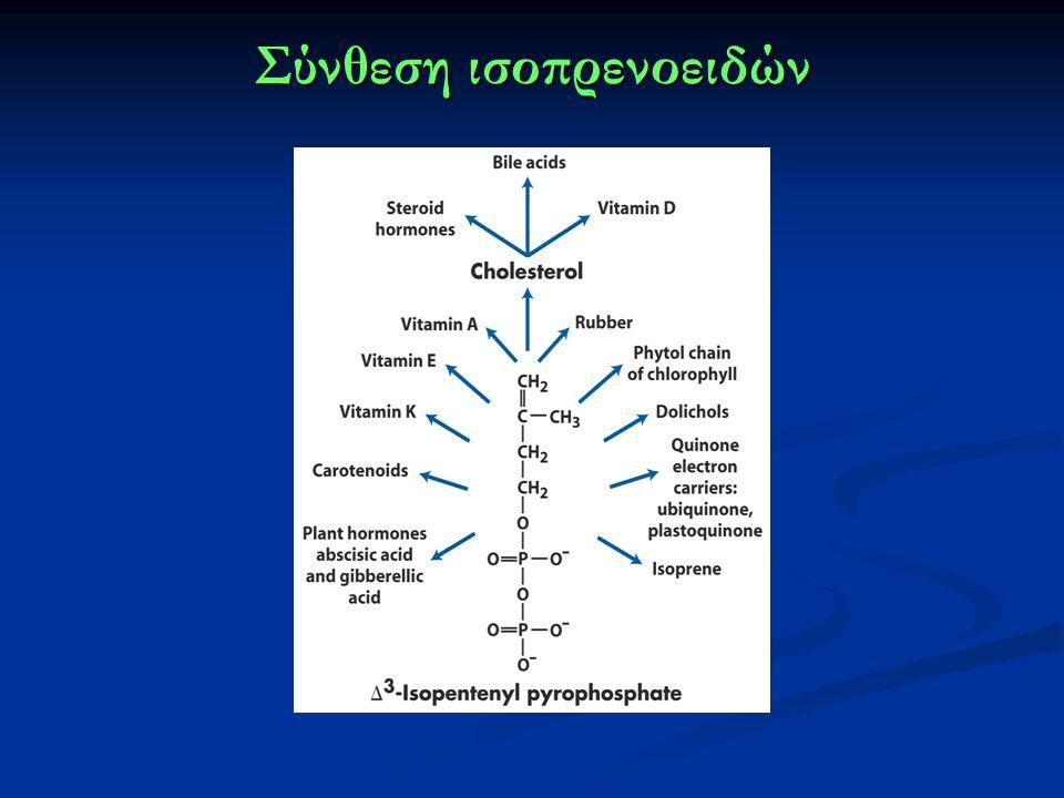 Σύνθεση ισοπρενοειδών