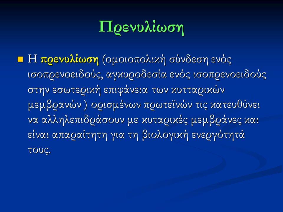 Πρενυλίωση Η πρενυλίωση (ομοιοπολική σύνδεση ενός ισοπρενοειδούς, αγκυροδεσία ενός ισοπρενοειδούς στην εσωτερική επιφάνεια των κυτταρικών μεμβρανών ) ορισμένων πρωτεϊνών τις κατευθύνει να αλληλεπιδράσουν με κυταρικές μεμβράνες και είναι απαραίτητη για τη βιολογική ενεργότητά τους.