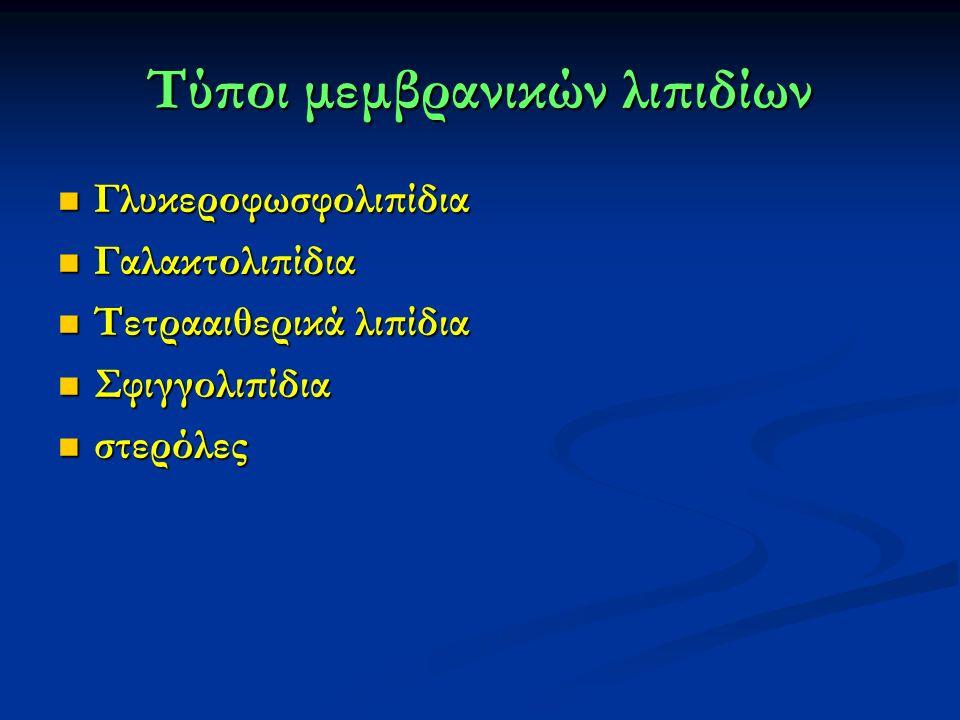 Τύποι μεμβρανικών λιπιδίων Γλυκεροφωσφολιπίδια Γλυκεροφωσφολιπίδια Γαλακτολιπίδια Γαλακτολιπίδια Τετρααιθερικά λιπίδια Τετρααιθερικά λιπίδια Σφιγγολιπίδια Σφιγγολιπίδια στερόλες στερόλες