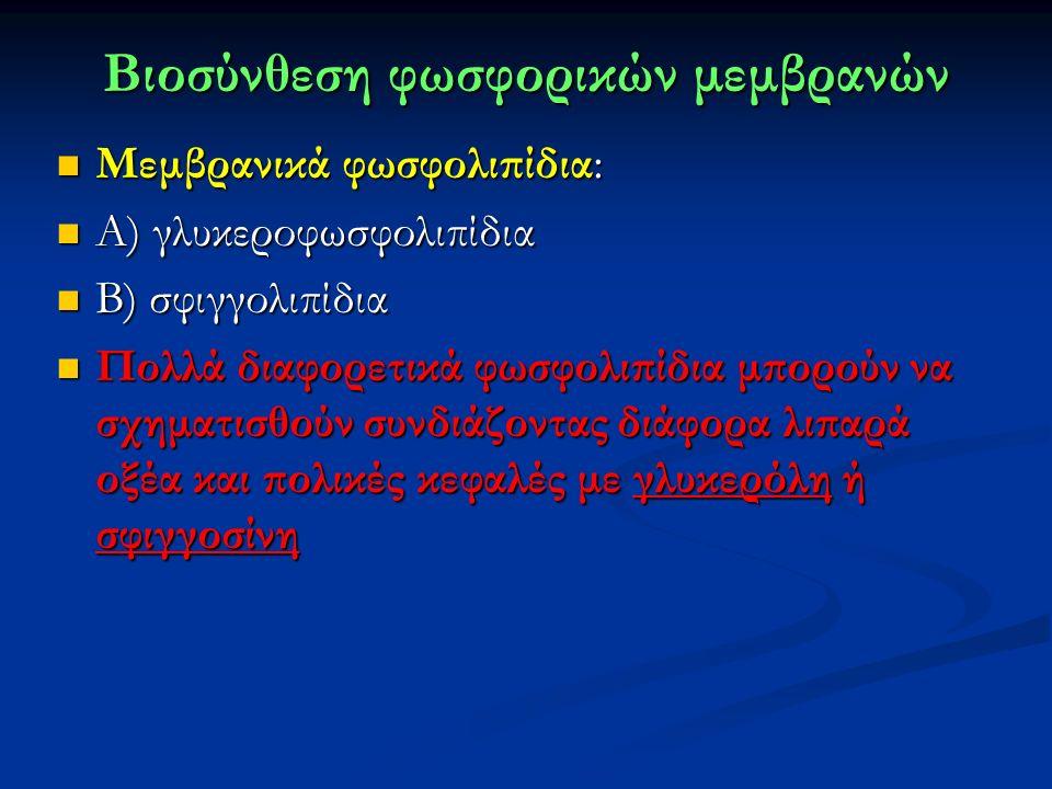 Bιοσύνθεση φωσφορικών μεμβρανών Μεμβρανικά φωσφολιπίδια: Μεμβρανικά φωσφολιπίδια: Α) γλυκεροφωσφολιπίδια Α) γλυκεροφωσφολιπίδια Β) σφιγγολιπίδια Β) σφιγγολιπίδια Πολλά διαφορετικά φωσφολιπίδια μπορούν να σχηματισθούν συνδιάζοντας διάφορα λιπαρά οξέα και πολικές κεφαλές με γλυκερόλη ή σφιγγοσίνη Πολλά διαφορετικά φωσφολιπίδια μπορούν να σχηματισθούν συνδιάζοντας διάφορα λιπαρά οξέα και πολικές κεφαλές με γλυκερόλη ή σφιγγοσίνη