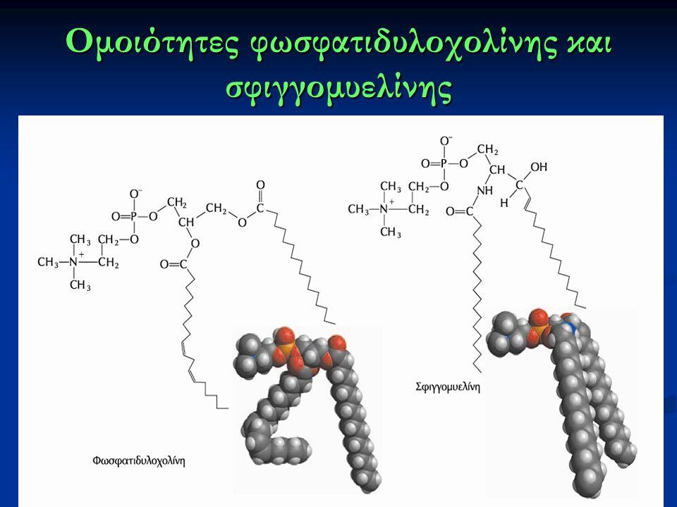 Ομοιότητες φωσφατιδυλοχολίνης και σφιγγομυελίνης