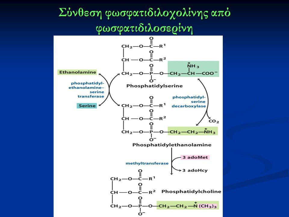 Σύνθεση φωσφατιδιλοχολίνης από φωσφατιδιλοσερίνη