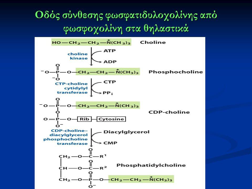 Οδός σύνθεσης φωσφατιδυλοχολίνης από φωσφοχολίνη στα θηλαστικά