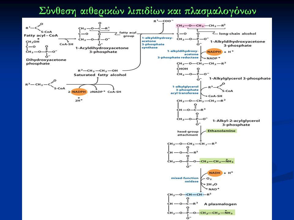 Σύνθεση αιθερικών λιπιδίων και πλασμαλογόνων