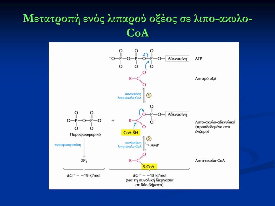 Μετατροπή ενός λιπαρού οξέος σε λιπο-ακυλο- CoA