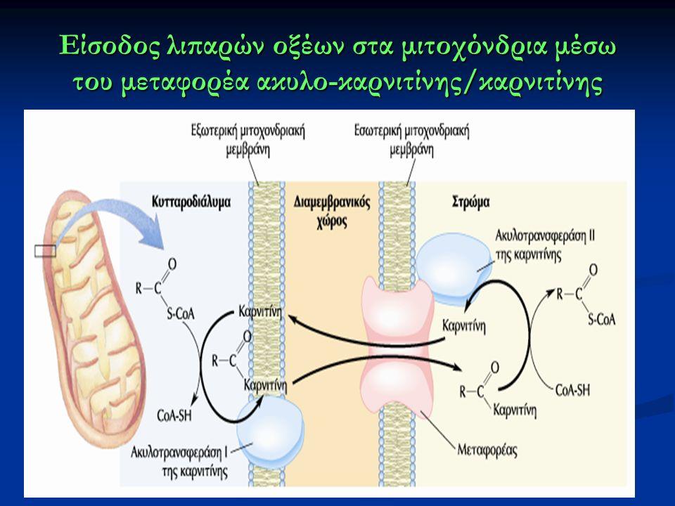 Είσοδος λιπαρών οξέων στα μιτοχόνδρια μέσω του μεταφορέα ακυλο-καρνιτίνης/καρνιτίνης