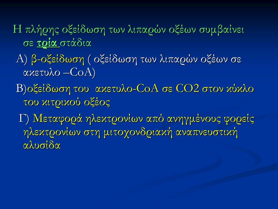 Η πλήρης οξείδωση των λιπαρών οξέων συμβαίνει σε τρία στάδια Α) β-οξείδωση ( οξείδωση των λιπαρών οξέων σε ακετυλο –CoA) Α) β-οξείδωση ( οξείδωση των λιπαρών οξέων σε ακετυλο –CoA) B)οξείδωση του ακετυλο-CoA σε CO2 στον κύκλο του κιτρικού οξέος B)οξείδωση του ακετυλο-CoA σε CO2 στον κύκλο του κιτρικού οξέος Γ) Μεταφορά ηλεκτρονίων από ανηγμένους φορείς ηλεκτρονίων στη μιτοχονδριακή αναπνευστική αλυσίδα Γ) Μεταφορά ηλεκτρονίων από ανηγμένους φορείς ηλεκτρονίων στη μιτοχονδριακή αναπνευστική αλυσίδα