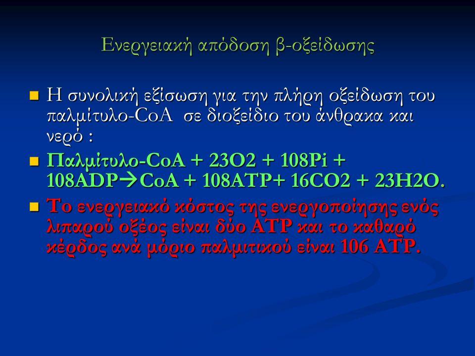 Ενεργειακή απόδοση β-οξείδωσης Η συνολική εξίσωση για την πλήρη οξείδωση του παλμίτυλο-CoA σε διοξείδιο του άνθρακα και νερό : Η συνολική εξίσωση για την πλήρη οξείδωση του παλμίτυλο-CoA σε διοξείδιο του άνθρακα και νερό : Παλμίτυλο-CoA + 23O2 + 108Pi + 108ADP  CoA + 108ATP+ 16CO2 + 23H2O.
