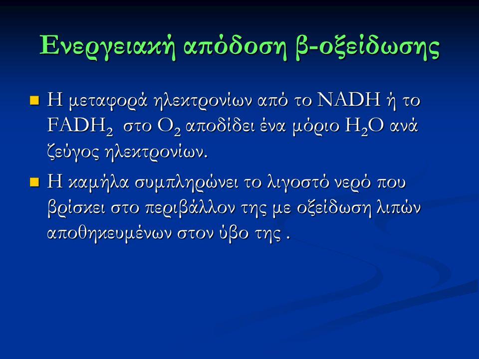 Ενεργειακή απόδοση β-οξείδωσης Η μεταφορά ηλεκτρονίων από το NADH ή το FADH 2 στο Ο 2 αποδίδει ένα μόριο Η 2 Ο ανά ζεύγος ηλεκτρονίων.