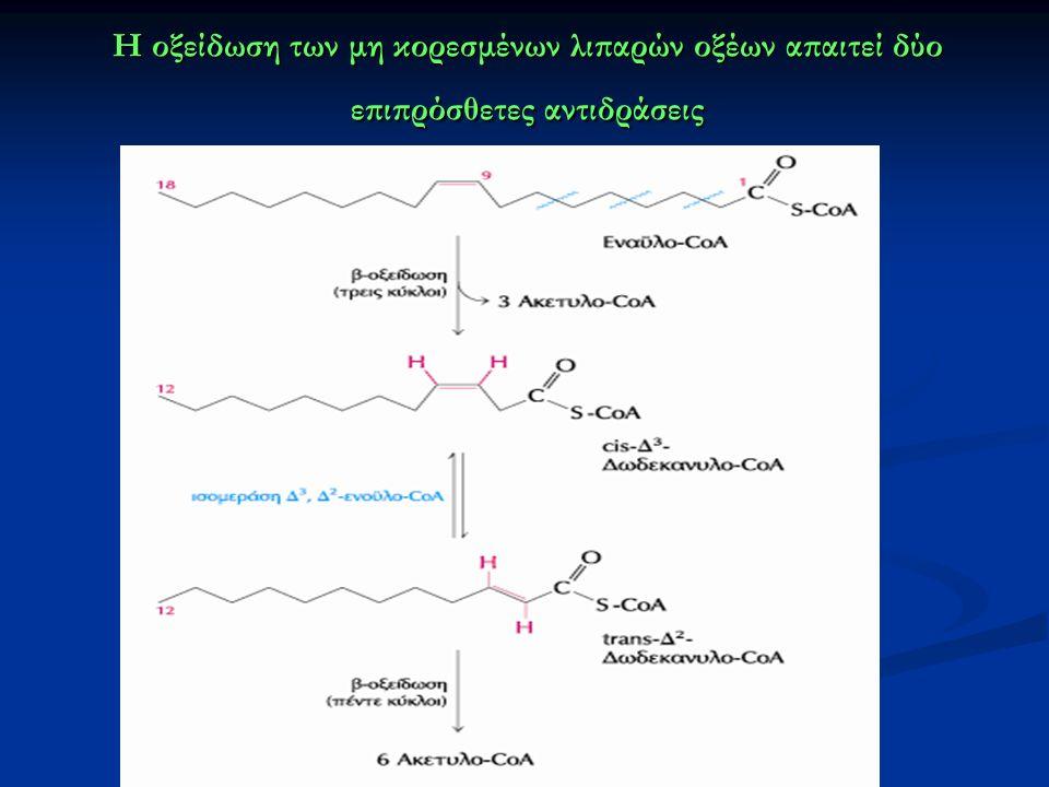 Η οξείδωση των μη κορεσμένων λιπαρών οξέων απαιτεί δύο επιπρόσθετες αντιδράσεις