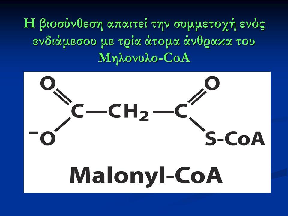 Η βιοσύνθεση απαιτεί την συμμετοχή ενός ενδιάμεσου με τρία άτομα άνθρακα του Μηλονυλο-CoA