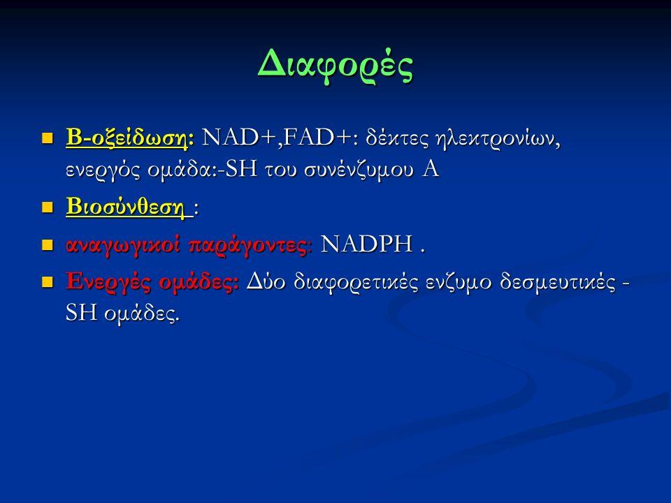Διαφορές Β-οξείδωση: NAD+,FAD+: δέκτες ηλεκτρονίων, ενεργός ομάδα:-SH του συνένζυμου Α Β-οξείδωση: NAD+,FAD+: δέκτες ηλεκτρονίων, ενεργός ομάδα:-SH του συνένζυμου Α Βιοσύνθεση : Βιοσύνθεση : αναγωγικοί παράγοντες: ΝΑDPH.
