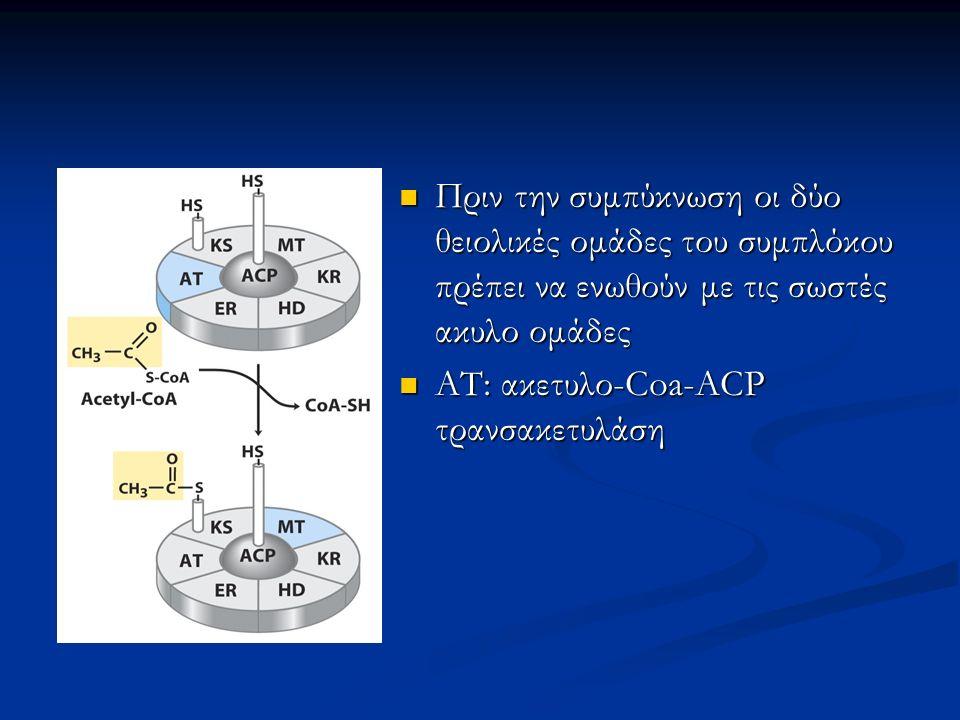 Πριν την συμπύκνωση οι δύο θειολικές ομάδες του συμπλόκου πρέπει να ενωθούν με τις σωστές ακυλο ομάδες ΑΤ: ακετυλο-Coa-ACP τρανσακετυλάση