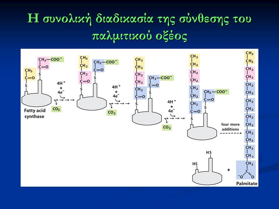 Η συνολική διαδικασία της σύνθεσης του παλμιτικού οξέος