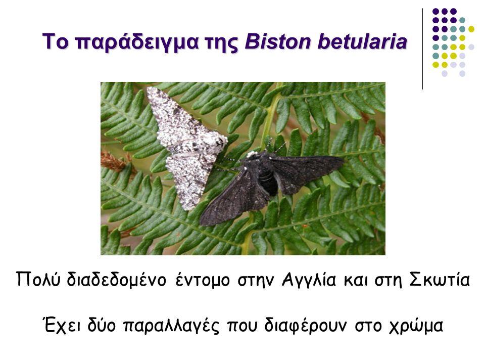 Το παράδειγμα της Biston betularia Πολύ διαδεδομένο έντομο στην Αγγλία και στη Σκωτία Έχει δύο παραλλαγές που διαφέρουν στο χρώμα